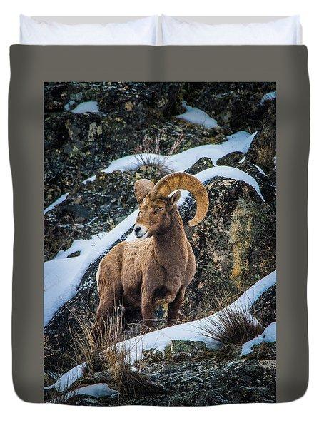Bighorn Ram 2 Duvet Cover