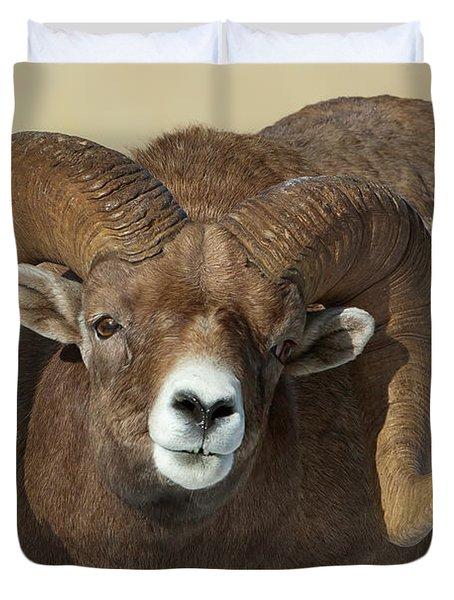 Bighorn Ram In Montana Duvet Cover