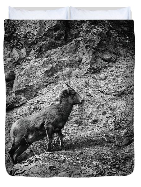 Bighorn Sheep Ewe On Wolf Creek Pass Duvet Cover