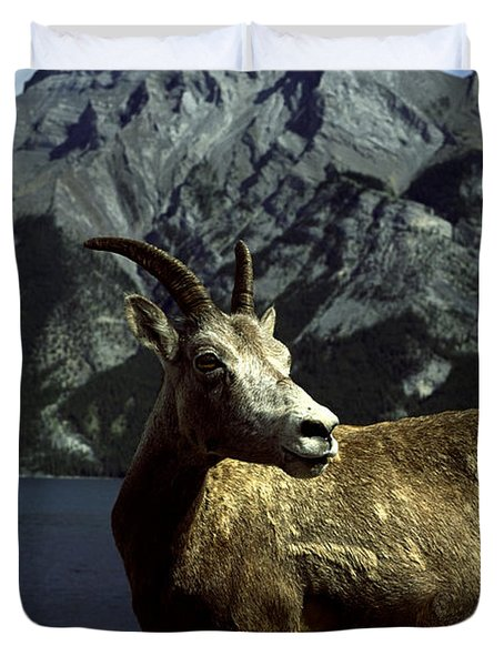 Bighorn Sheep Duvet Cover by Sally Weigand