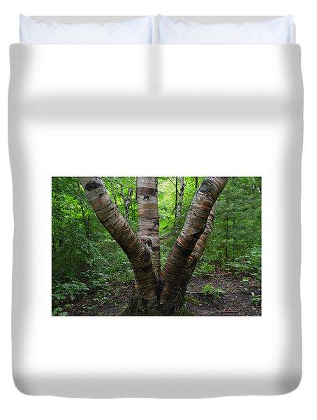 Birch Bark Tree Trunks Duvet Cover