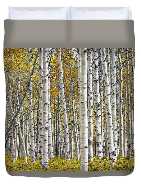 Birch Tree Grove With A Touch Of Yellow Color Duvet Cover