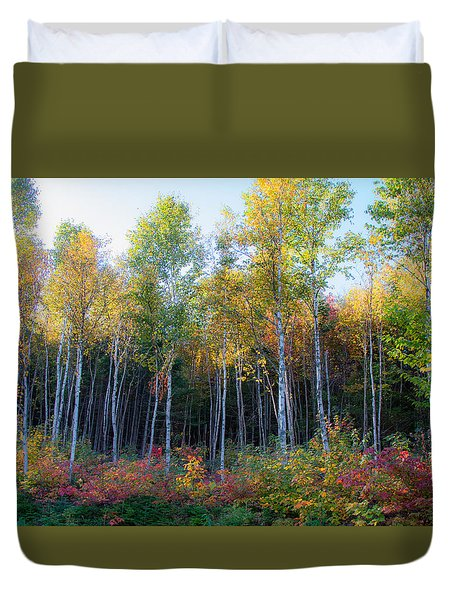Birch Trees Turn To Gold Duvet Cover
