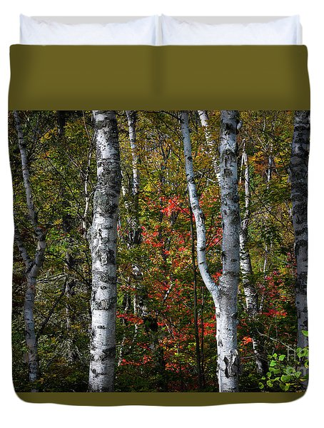 Duvet Cover featuring the photograph Birches by Elena Elisseeva