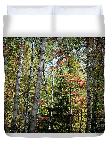 Duvet Cover featuring the photograph Birches In Fall Forest by Elena Elisseeva