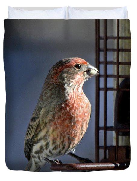 Bird Feeding In The Afternoon Sun Duvet Cover