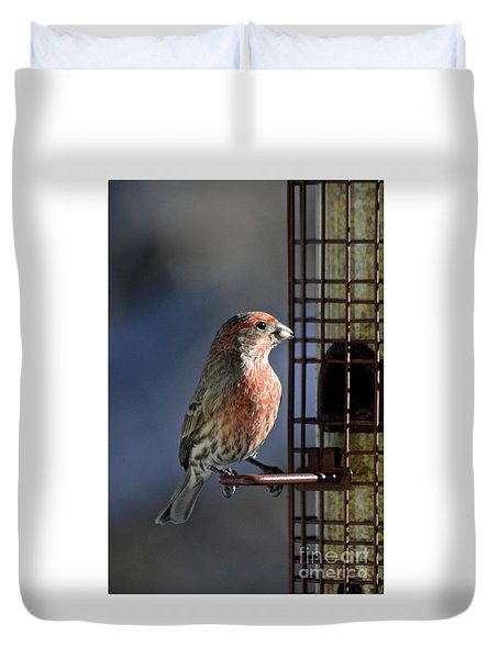 Bird Feeding In The Afternoon Sun Duvet Cover