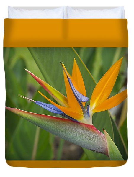 Bird Of Paradise Duvet Cover by Christina Lihani