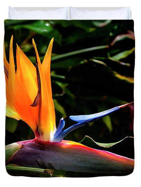 Bird Of Paradise Flower Duvet Cover by Brian Harig