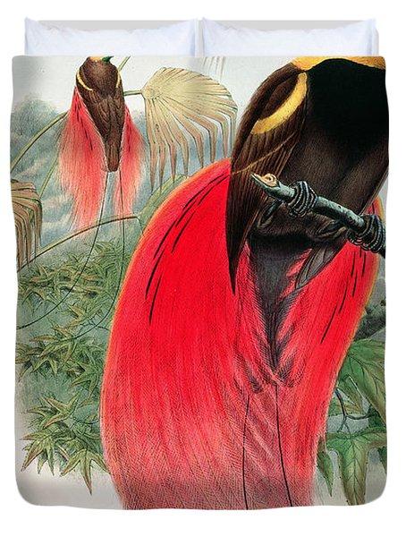 Bird Of Paradise Duvet Cover by John Gould