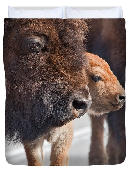 Bison And Calf Duvet Cover