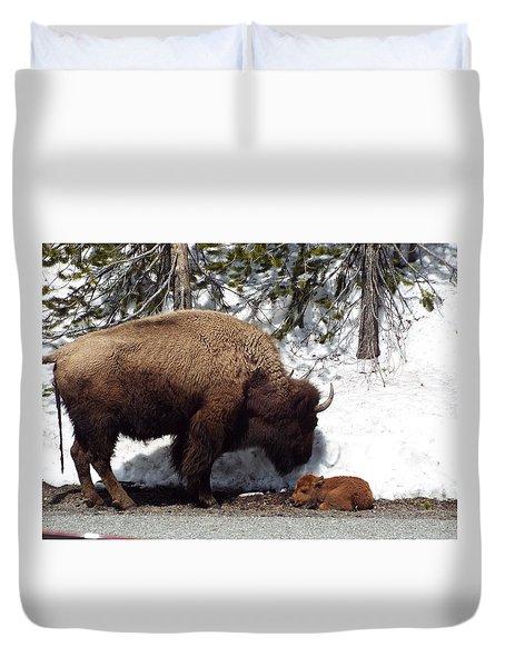 Bison Calf After Birth Duvet Cover
