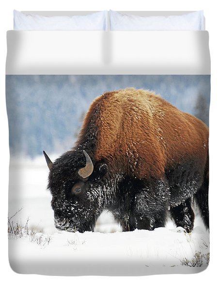 Bison Roaming In The Lamar Valley Duvet Cover