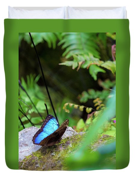 Duvet Cover featuring the photograph Black And Blue Butterfly by Raphael Lopez