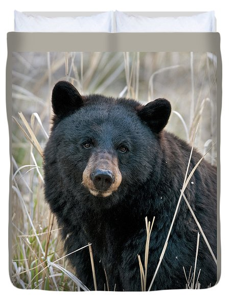 Black Bear Closeup Duvet Cover