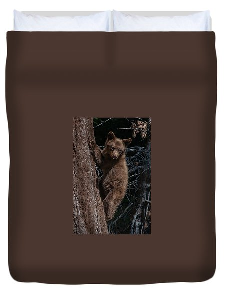 Black Bear Cub Sequoia National Park Duvet Cover