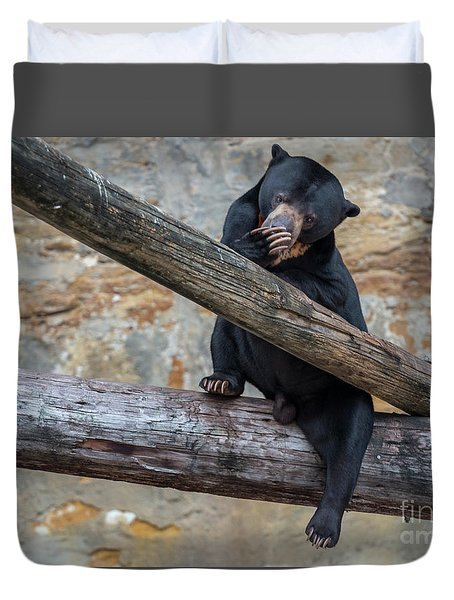 Black Bear Cub Sitting On Tree Trunk Duvet Cover