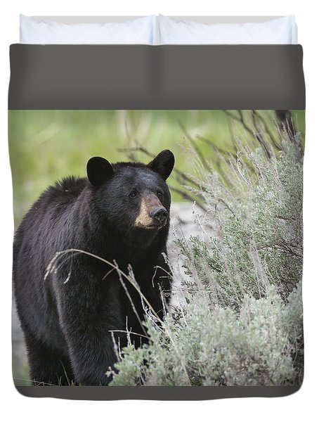 Black Bear Sow Duvet Cover