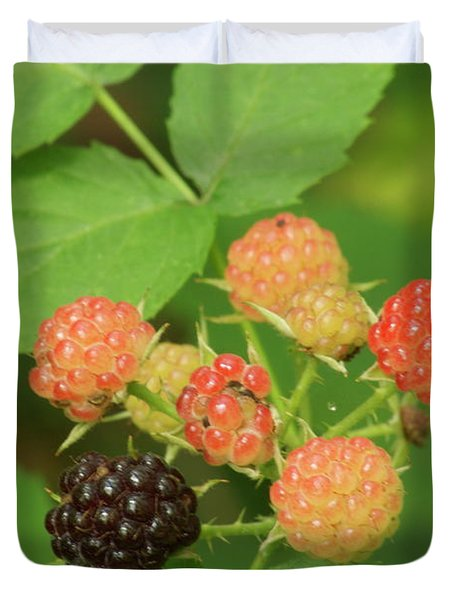 Black Berries Duvet Cover by Michael Peychich