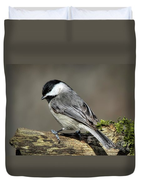 Black-capped Chichadee Duvet Cover