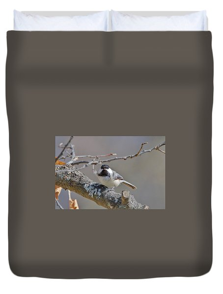 Duvet Cover featuring the photograph Black Capped Chickadee 1109 by Michael Peychich