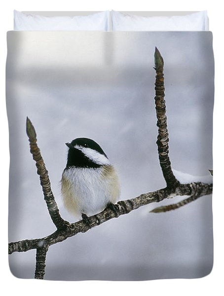 Black-capped Chickadee, Alberta Duvet Cover