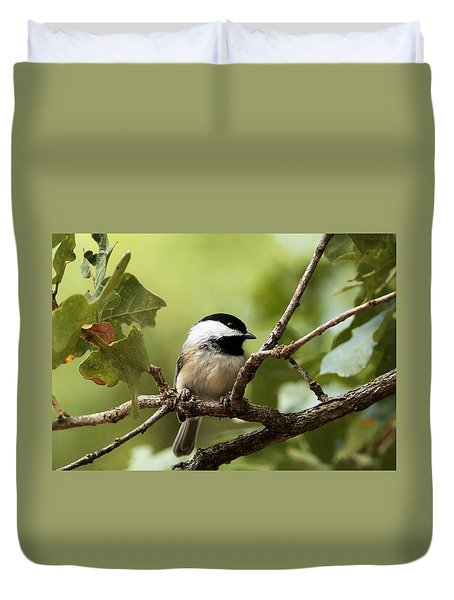 Black Capped Chickadee On Branch Duvet Cover by Sheila Brown