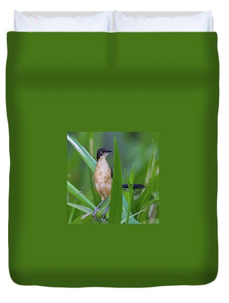 Black-capped Donacobius Duvet Cover