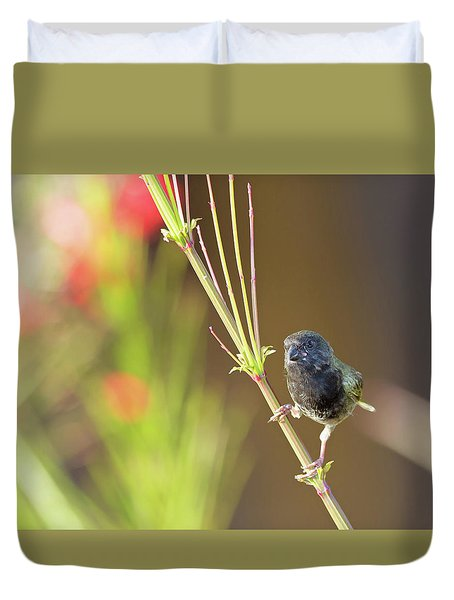 Black-faced Grassquit Duvet Cover