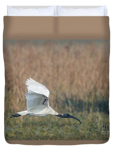 Black-headed Ibis 01 Duvet Cover