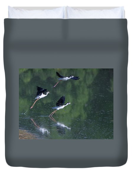 Black-necked Stilts 4302-080917-2cr Duvet Cover