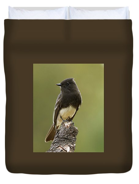 Black Phoebe Duvet Cover by Doug Herr