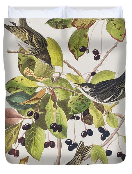 Black Poll Warbler Duvet Cover by John James Audubon
