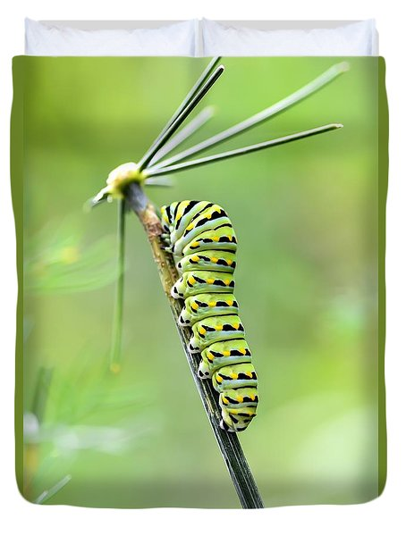 Black Swallowtail Caterpillar Duvet Cover by Debbie Green