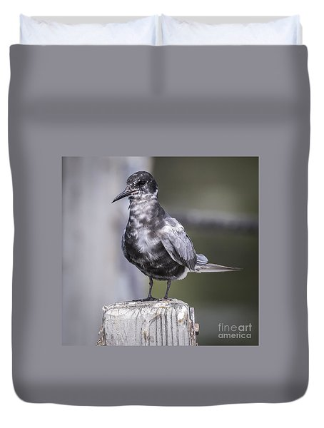 Duvet Cover featuring the photograph Black Tern  by Ricky L Jones