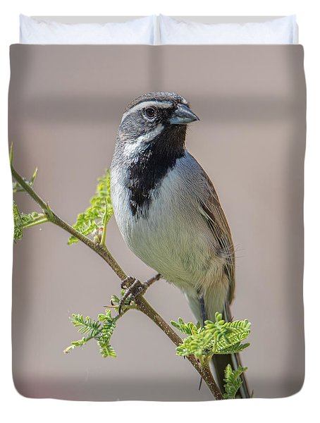 Black-throated Sparrow Duvet Cover