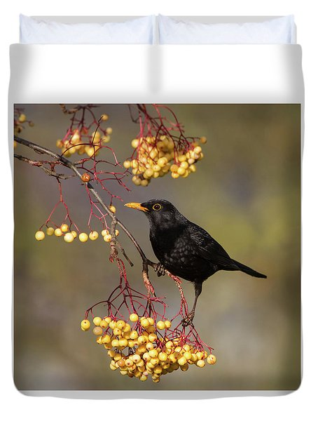 Blackbird Yellow Berries Duvet Cover