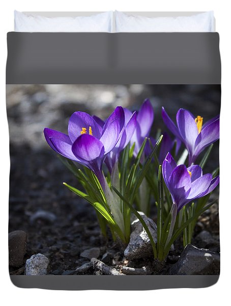 Blooming Crocus #2 Duvet Cover by Jeff Severson