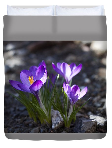 Blooming Crocus #3 Duvet Cover by Jeff Severson