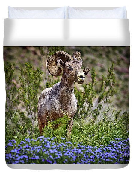 Blooms And Bighorn In Anza Borrego Desert State Park  Duvet Cover