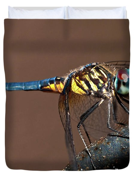 Blue And Gold Dragonfly Duvet Cover