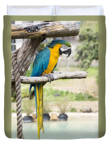 Blue And Gold Macaw Duvet Cover by Ricky Dean