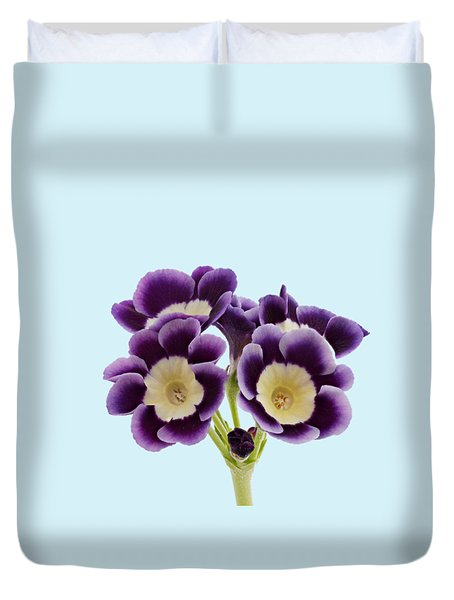 Duvet Cover featuring the photograph Blue Auricula On A Transparent Background by Paul Gulliver