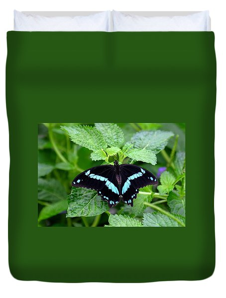 Blue Banded Swallowtail Butterfly Duvet Cover