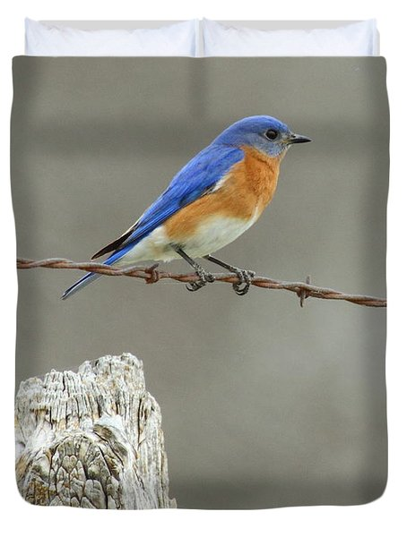 Blue Bird On Barbed Wire Duvet Cover by Robert Frederick