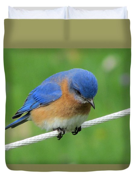 Blue Bird On Clothesline Duvet Cover by Betty Pieper