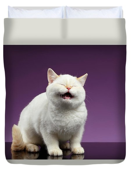 Blue Eyed British Kitten Meowing On Purple  Duvet Cover