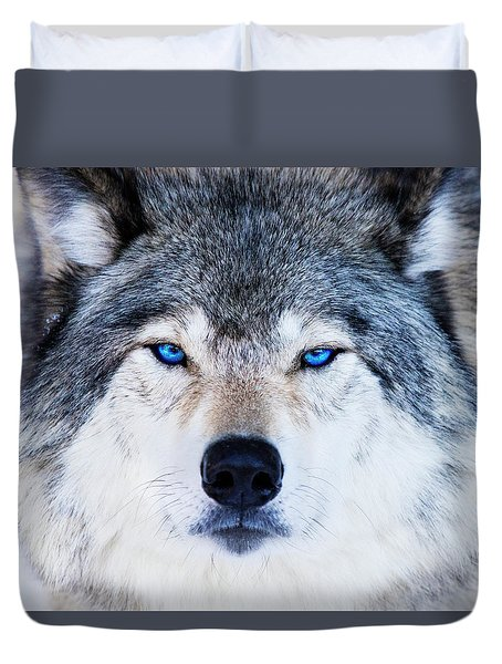 Duvet Cover featuring the photograph Blue Eyed Wolf Portrait by Mircea Costina Photography