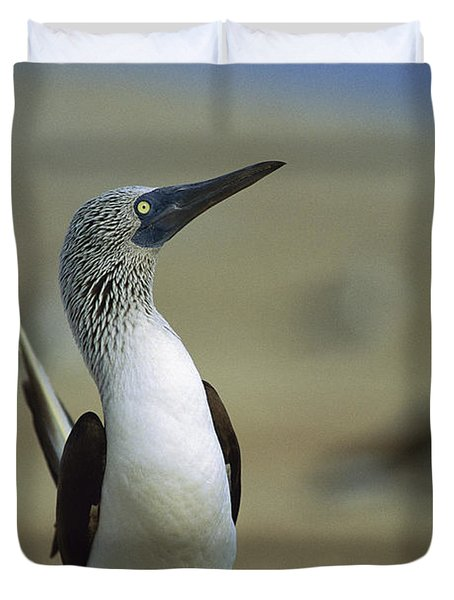 Duvet Cover featuring the photograph Blue-footed Booby Sula Nebouxii by Tui De Roy