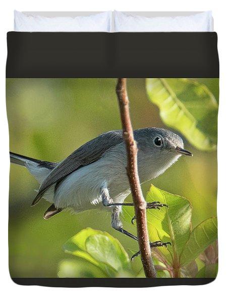 Blue Gray Gnatcatcher Duvet Cover